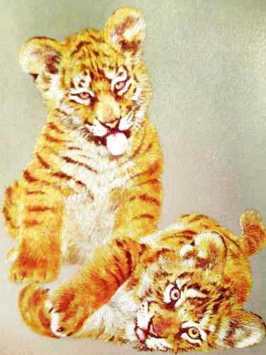 Zwei Tigerbabys Alubild