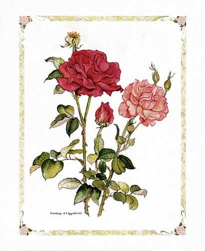 Rote Rosen, Cappello Kunstdruck 20x25