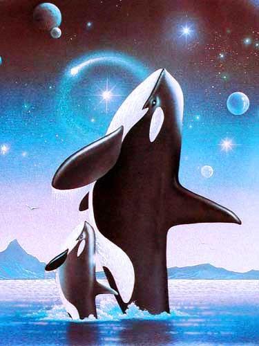 Orcas by Alan Metz *