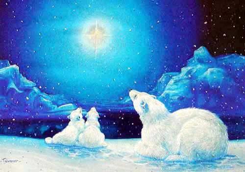 Eisbären und Nordstern Bild