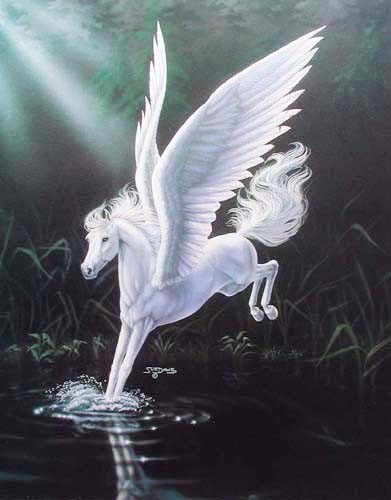 Pegasus im Wasser by Sue Dawe