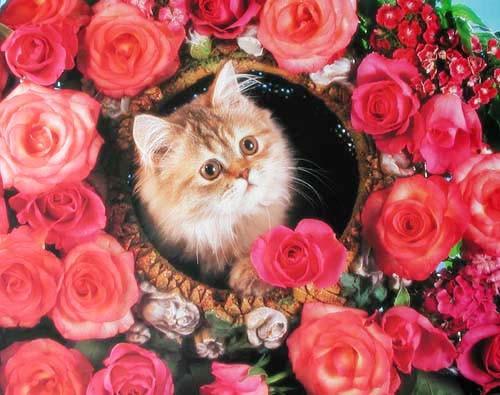 Katze in Rosen