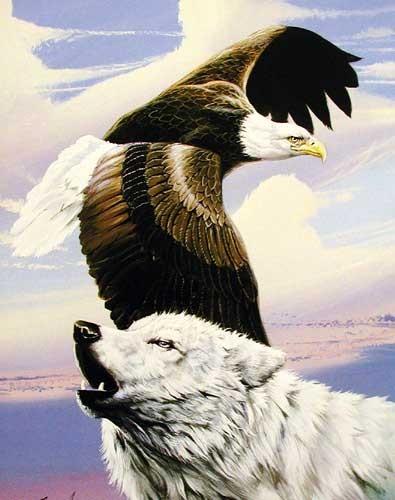 Weißer Wolf und Seeadler Kunstdruck
