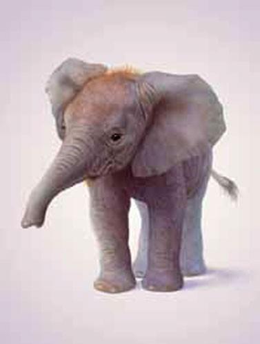 Kleiner Elefant, Elephant Calf