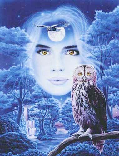 Eulen, Flight of the Owls by Meklejohn Graphics