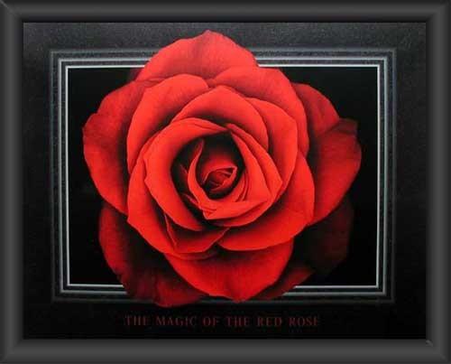 Rote Rose, Magic of the Red Rose