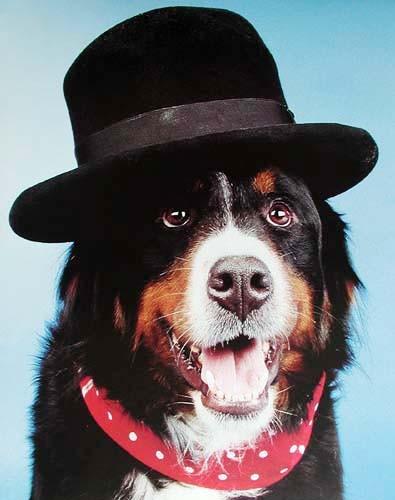 Schwarzer Hund mit einem Hut, Poster 40x50