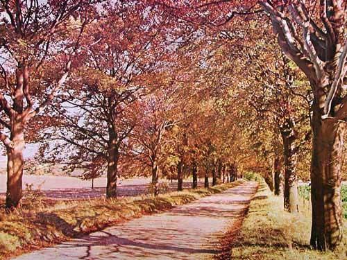 Ardington, near Wantage
