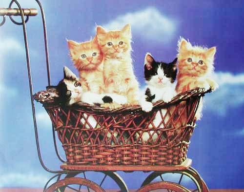 Katzen im Wagen