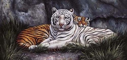 Weißer und Gelber Tiger Kunstdruck