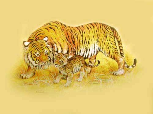 Sibirischer Tiger, gold by M. Fennell