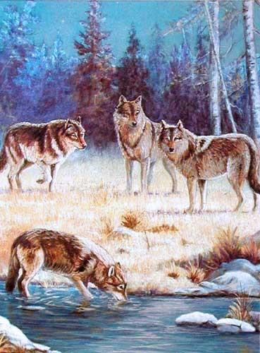 Wolfsrudel am Fluss Alu Bild