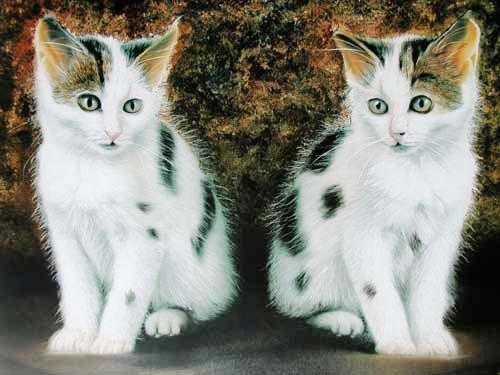 Zwei Katzen by Rul