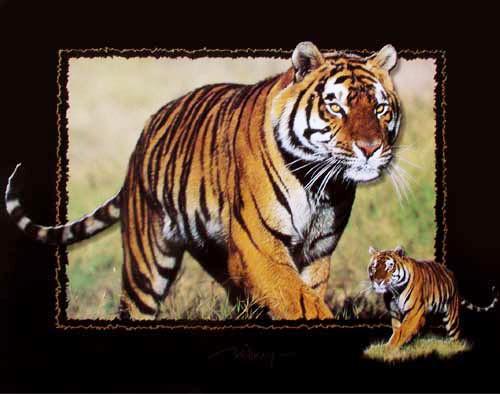 Sibirischer Tiger by Willney IV