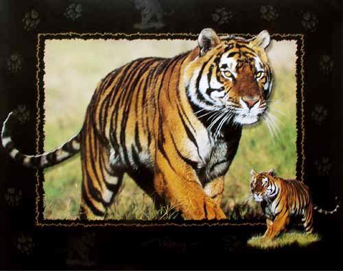 Sibirischer Tiger by Willney III