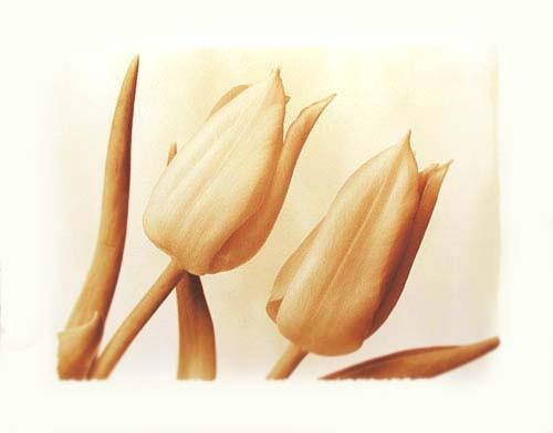 Sepia Tulpen Poster