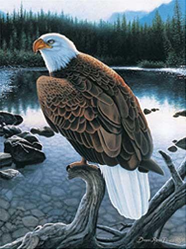 Weißkopfseeadler auf Ast Alu Bild