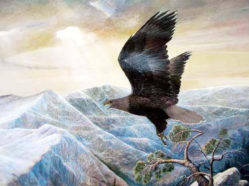 Adler im Sonnenuntergang Bild