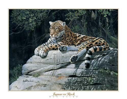 Jaguar by Don Balke
