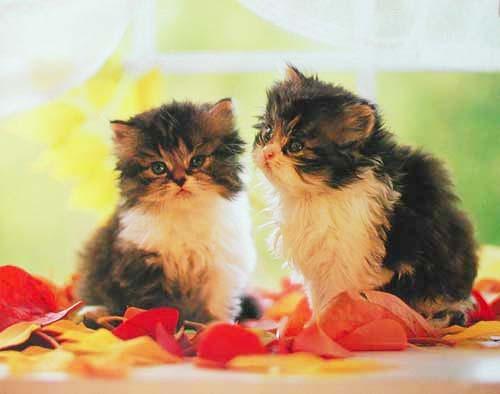 Katzen auf Fensterbank