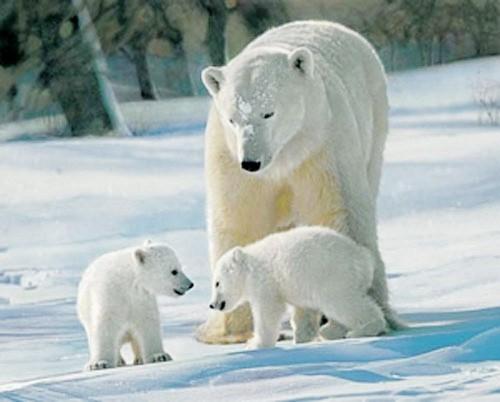 Eisbär und zwei Jungen Poster
