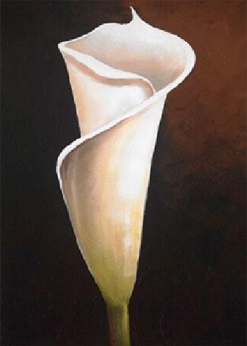 Weiße Calla-Lilie IV, S. Sauci