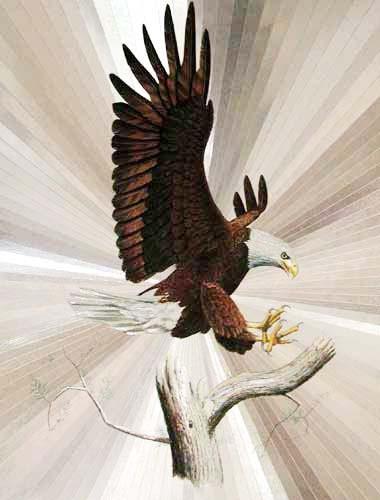 Weißkopfadler Alubild