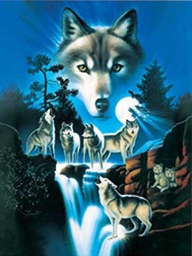 Wolfsrudel am Wasserfall Alu Bild