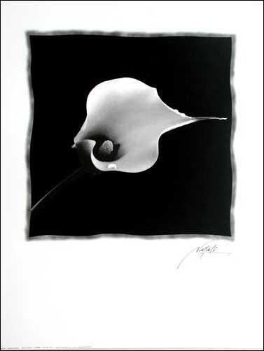 Schwarze Calla Poster in schwarz-weiss