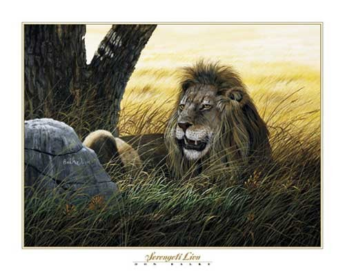 Löwe, Serengeti Lion by Don Balke
