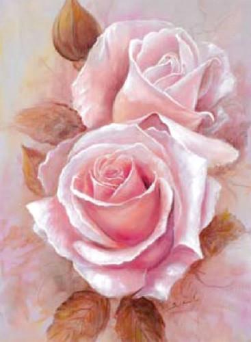 Pinke Rosen Bild