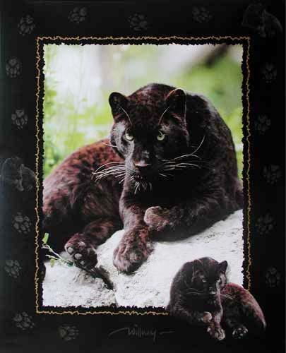 Schwarzer Panther by Willney III