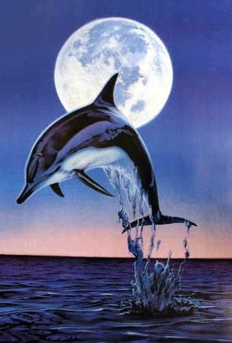 Moonlight Dolphin