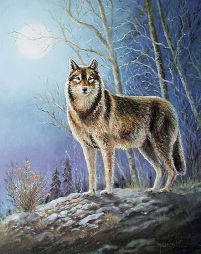 Einsamer Wolf von M. Caroselli - Kunstdruck 40x50