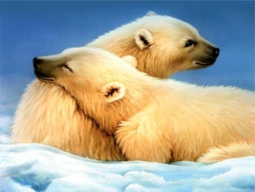 Zwei Eisbären Alubild