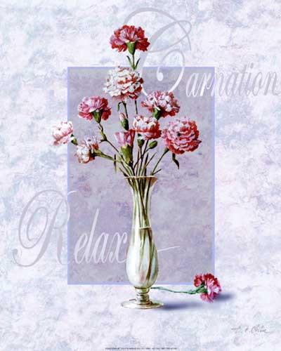 Blumen, Nelken