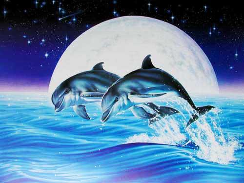 zwei delfine bei vollmond poster 50x70 cm online kaufen. Black Bedroom Furniture Sets. Home Design Ideas