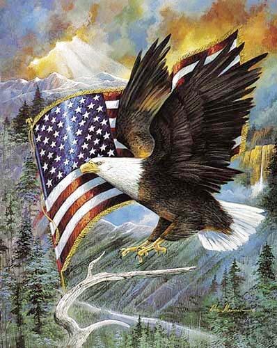 Seeadler und USA Fahne Alu Bild