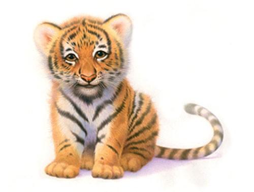 Tiger Cub by John Butler