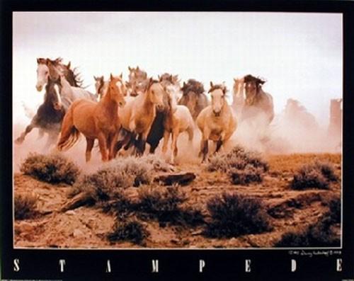 Pferde, Stampede by Vanderhoff