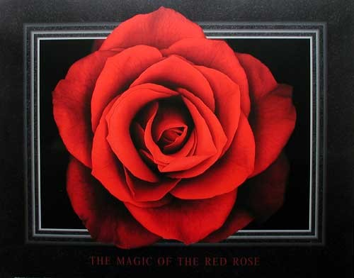 The Magic of the Red Rose by Lens & Lens *