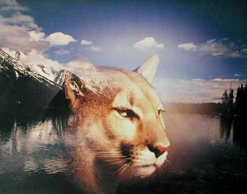 Mountain Lion und Grand Teton (laminiert)
