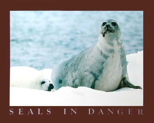 Seals in Danger