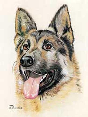 Deutscher Schäferhund by N. Dunsche
