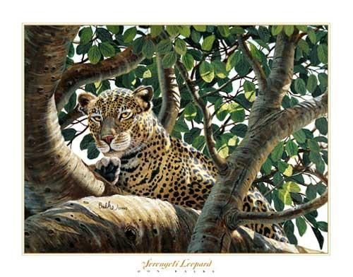 Serengeti Leopard von Don Balke Kunstdruck 40x50 cm