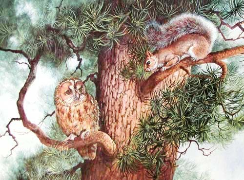 Tree Top Encounter by Daphne Baxter