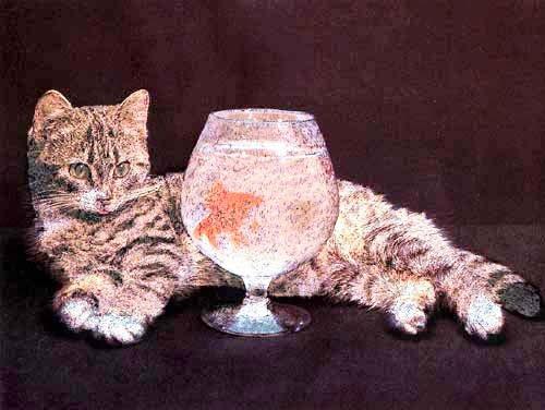 Katze und Goldfisch *
