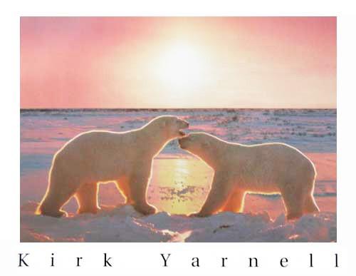 Eisbären im Sonnenuntergang Poster