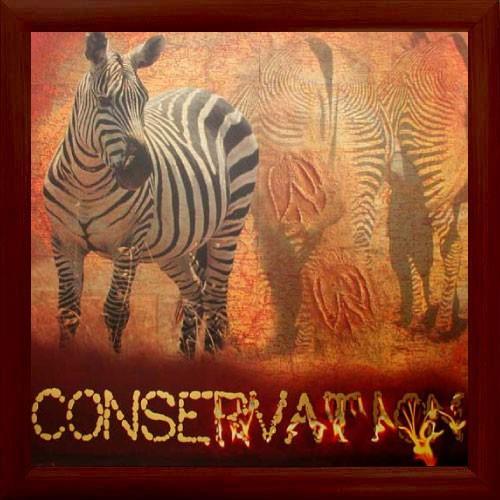 """Zebras, """"Conservation"""""""