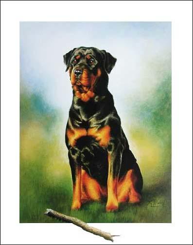 Rottweiler mit Ast, Meddite- Kunstdruck